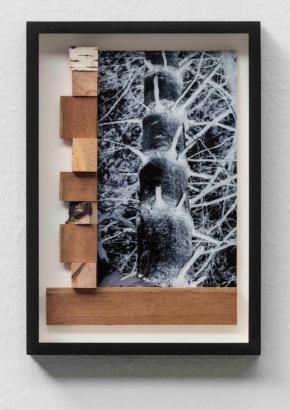 enter-11-between-trees